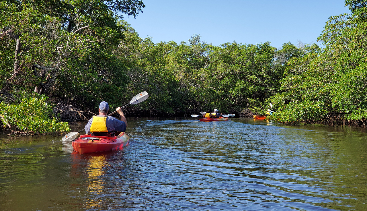 Mangroves By Kayak Guided Tour